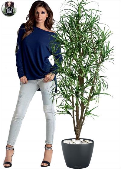 Dracena Yucca Mini - Medium Tre Altezze
