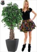 Ficus Jumbo Tronco Intrecciato H.167cm