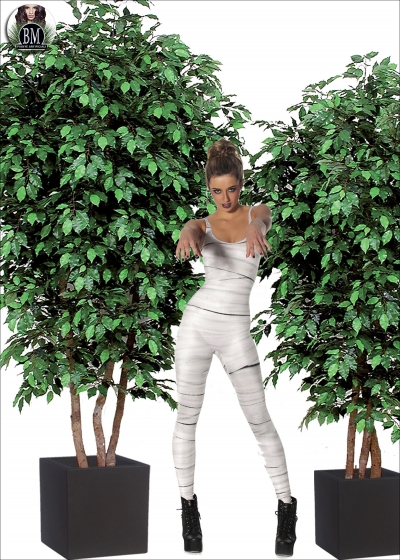 Ficus Lux Large Varie Altezze