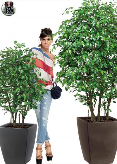 Ficus Mini Bosco Small Varie Altezze