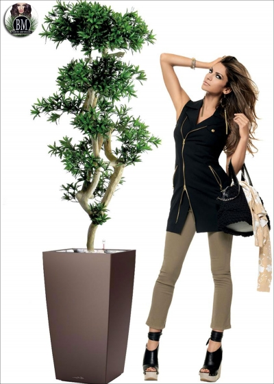 Jp Podocarpus Japan Verde H.185cm