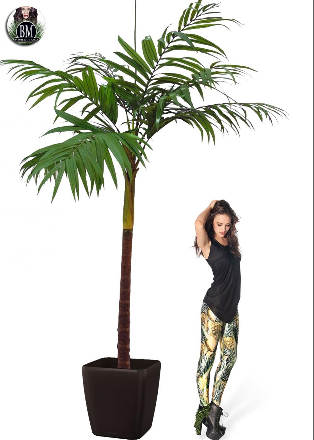 Pianta palma heaven for Palma pianta