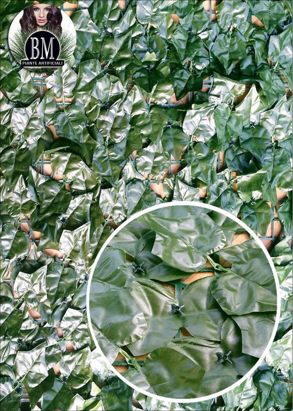 Siepe economica edera due misure for Edera sempreverde