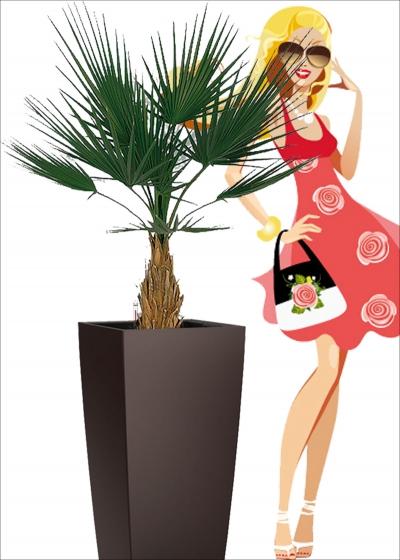 Camerus Palm Lux EXT h.100cm