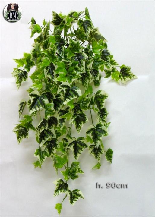 Edera bush 90cm Variegata