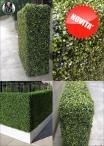 BOXWOOD 3D, SIEPE-HEDGE 3D Su Misura: CONTATTACI PER UN PREVENTIVO