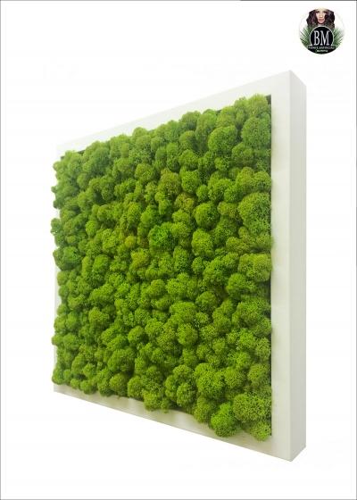QUADRO di LICHENE FREE (35x35cm) Vari Colori - Quadrato SMALL