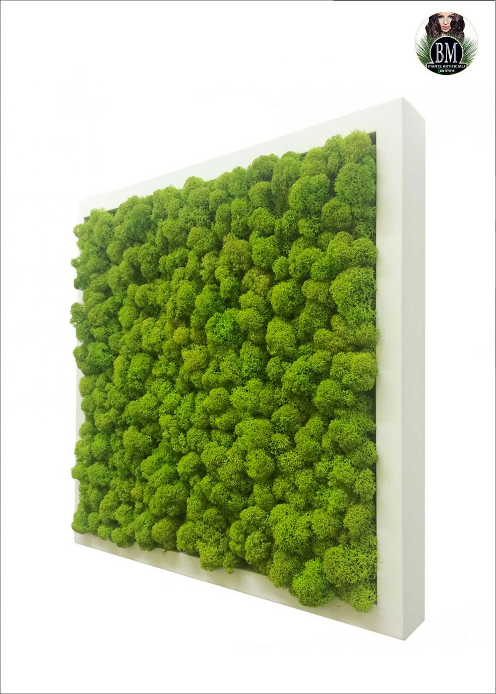 Lichene free 35x35cm vari colori quadrato small for Verde stabilizzato