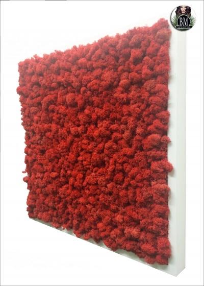 QUADRO di LICHENE FREE (50X50cm) Vari Colori - Quadrato MEDIUM