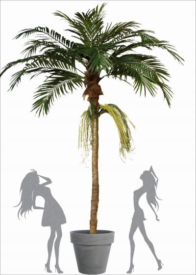 Majesty Florida Palm H. 380cm