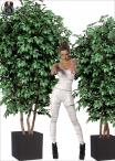 Ficus Lux Large varie Dimensioni