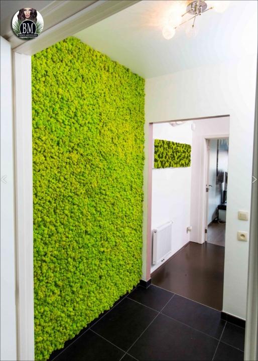 Parete di lichene pannelli da 100x100cm - Colori da parete ...
