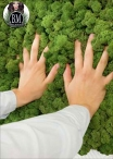 Pannello di Lichene per Pareti 100x100cm