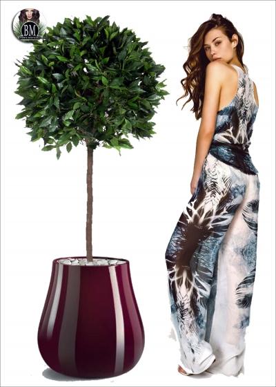 Alloro Plant EXT H.150cm Diam. 65