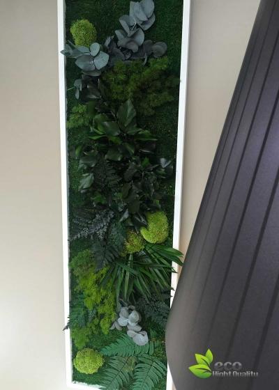 Quadro Vegetale Stabilizzato Mod. Cornice Free (20x70cm)