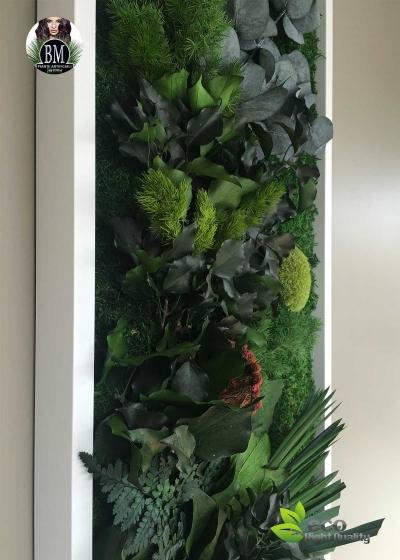 Quadro Vegetale Stabilizzato Mod. Cornice Free (40x140cm)