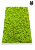 QUADRO di LICHENE FREE (60X100cm) Vari Colori - Rettangolo BIG