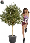 Olive Natural topiary Tre misure