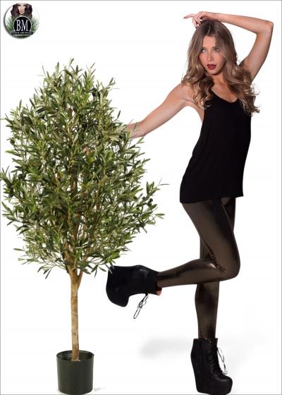 Olive Natural vine tree due Misure