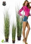Bamboo Wild Grass 3 Misure