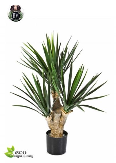Baby Yucca x 3 H. 68 cm