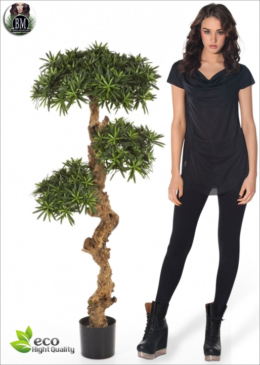 Podocarpus NEW Trunk 3 Misure