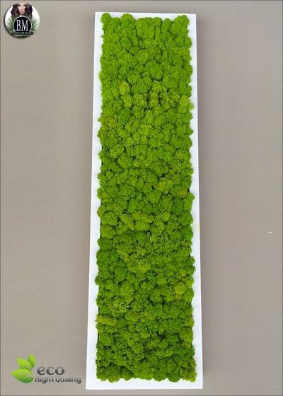 QUADRO di LICHENE FREE  (20X70cm) Vari Colori - Panoramico