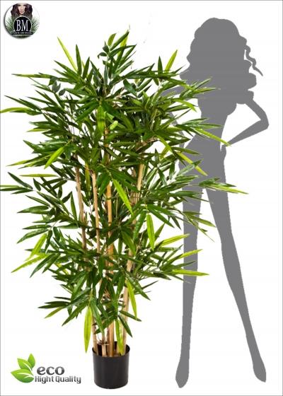 Bamboo Fitto BG sette Misure fino a 3 Mt