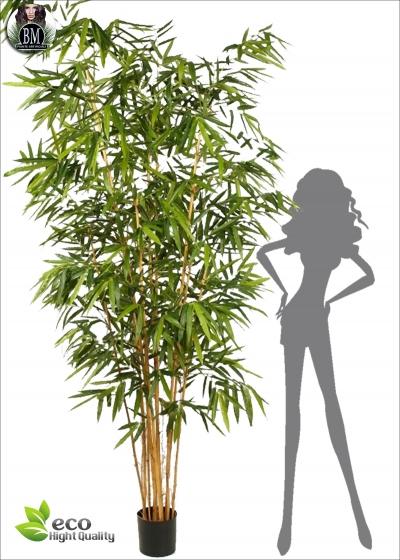 Bamboo Big BG Tre Altezze
