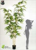 Bamboo Elegant BG H. 260cm