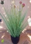 Allium Grass con fiori Rossi 3 Misure