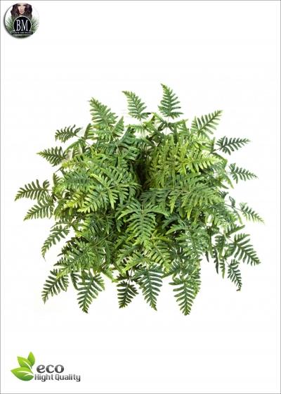 Felce Bush Athyrium x45  Diam. 90cm