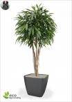 ROYAL LONGIFOLIA TREE DELUXE h 180 ø90cm