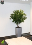 Acero Deluxe H.165 cm verde