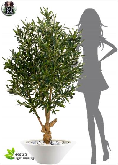 Olive Natural Twisted tree con Frutti Tre Misure