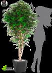 Betulla Artificiale Verde Varie Misure