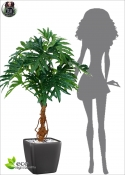 Philodendro Plant H. 125cm Green