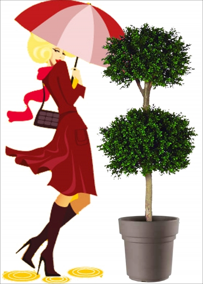 Boxwood Artificial Plant 2 Fields, Resistant H. 120