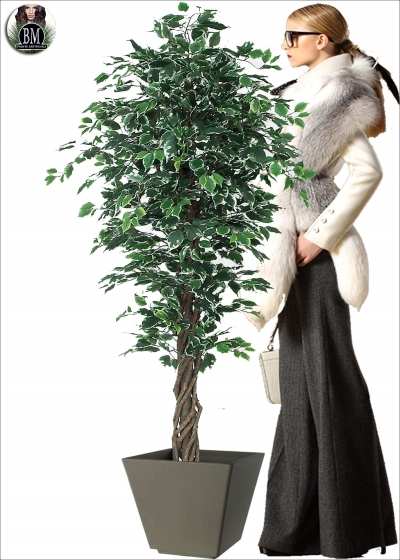 Elegance Artificial Ficus Liana Trunks Of Different Heights