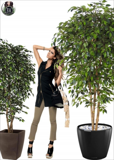 Ficus Artificial Mini Funds Various Heights