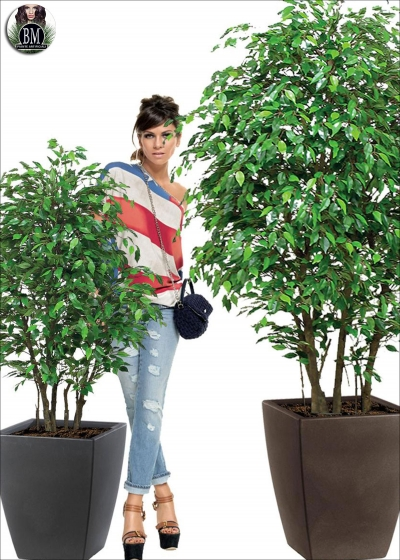 Ficus Artificial Mini Small Forest Of Different Heights