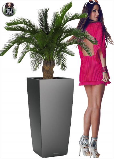 The Cycas palm Artificial Resistant U. V. H. 80