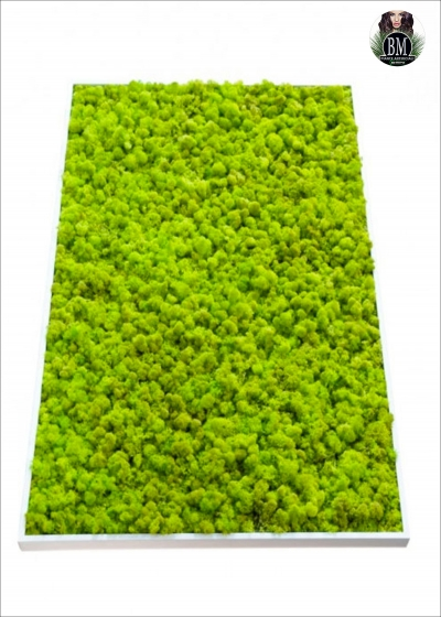 The PICTURE LICHEN FREE (50X150cm) Different Colors - Rectangle LARGE