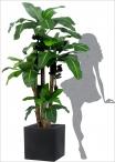 Banana Plant x 3