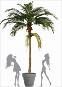 Majesty Artificiale Florida Palm H.360cm