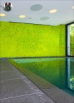 WALL OF LICHEN - panels 100x100cm Various Colors