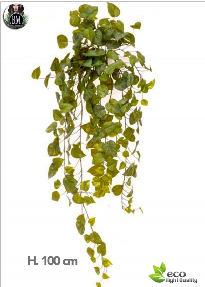 POTHOS 100 CM WITH A 244-GREEN LEAVES