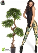 Podocarpus Crazy trunk 2 Misure