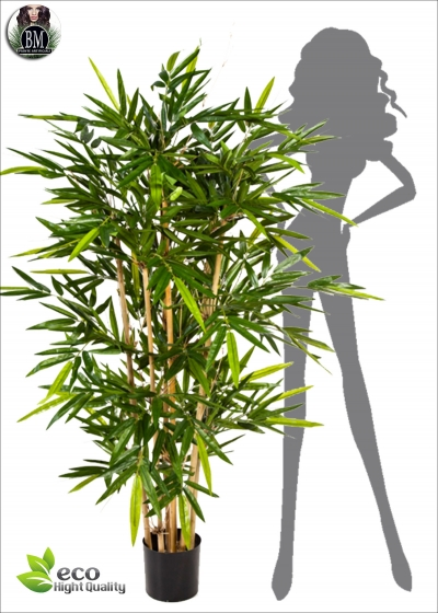 Bamboo Artificial Dense seven BG Measurements up to 3 Meters