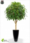 Ficus Lyrata Gigantea H.280cm